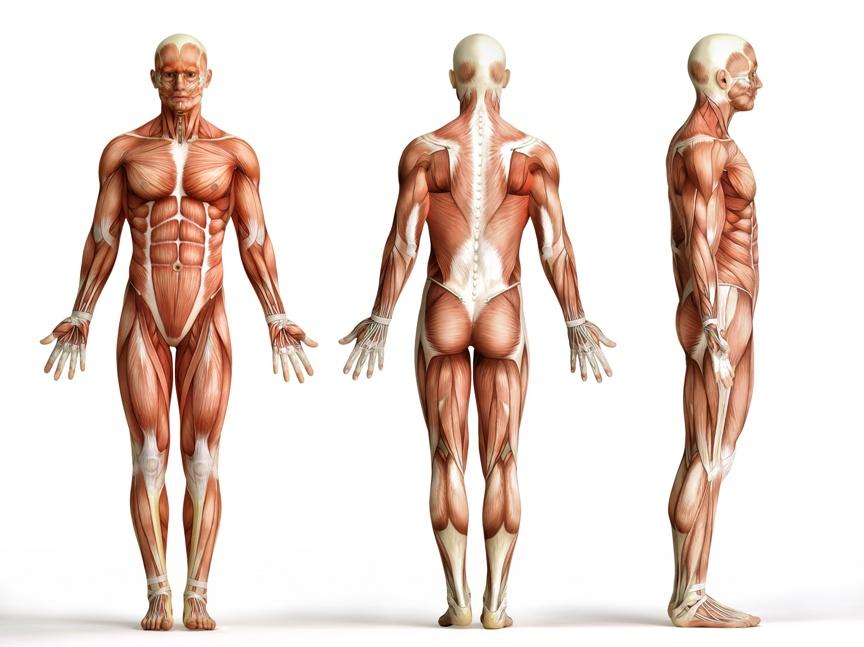Dystrofia mięśniowa rodzaje
